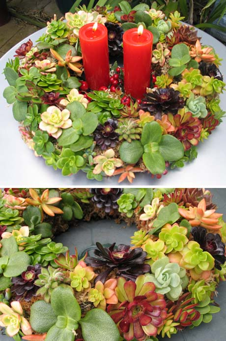 Christmas wreath using succulents