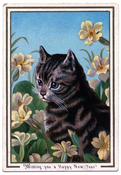 kittycat-graphicsfairy