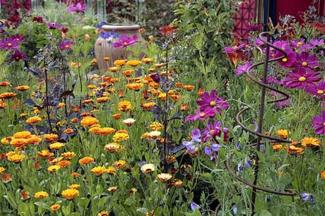 calendula and cosmos