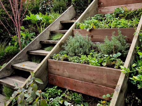 Herb Garden Ideas Flaming Petal Blog