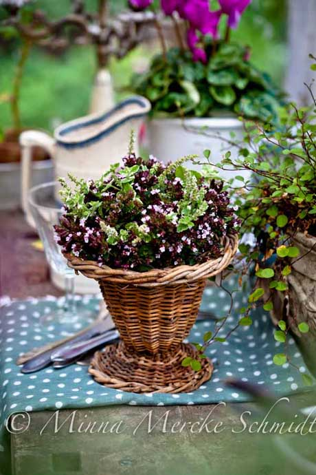 Herb bouquet in basket