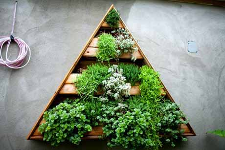 herb garden in triangle container