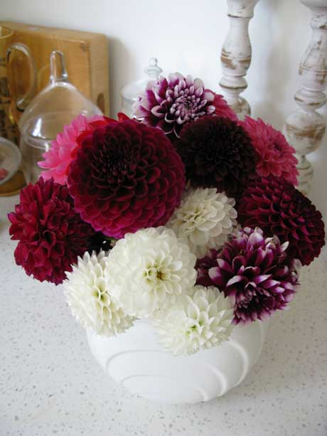 Mixed vase of dahlias