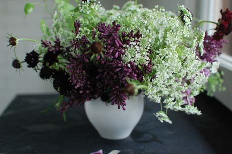 lilac and queen anne's lace