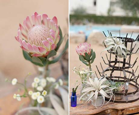 Table design with proteas