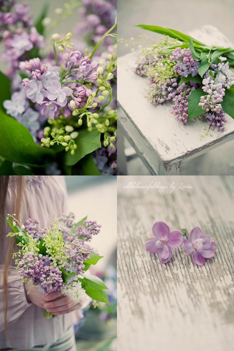 Bunch of purple lilacs