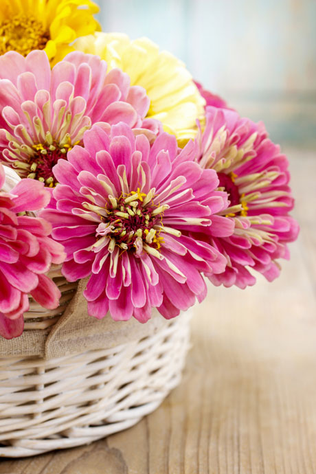 zinnias-in-basket