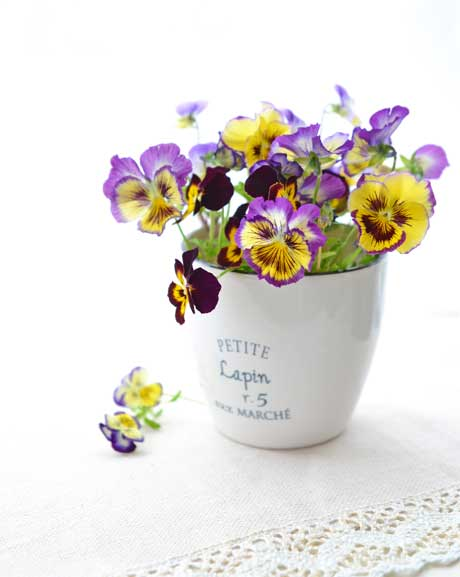 Pansies-in-ceramic-pot