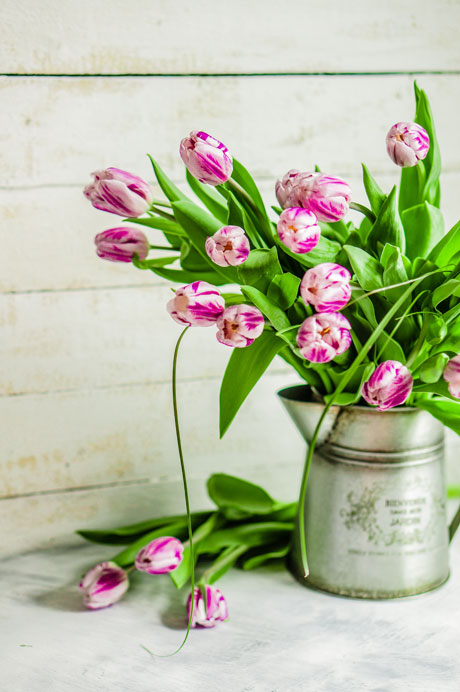 tulips-for-spring